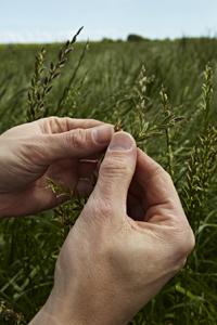 grass_plant-3